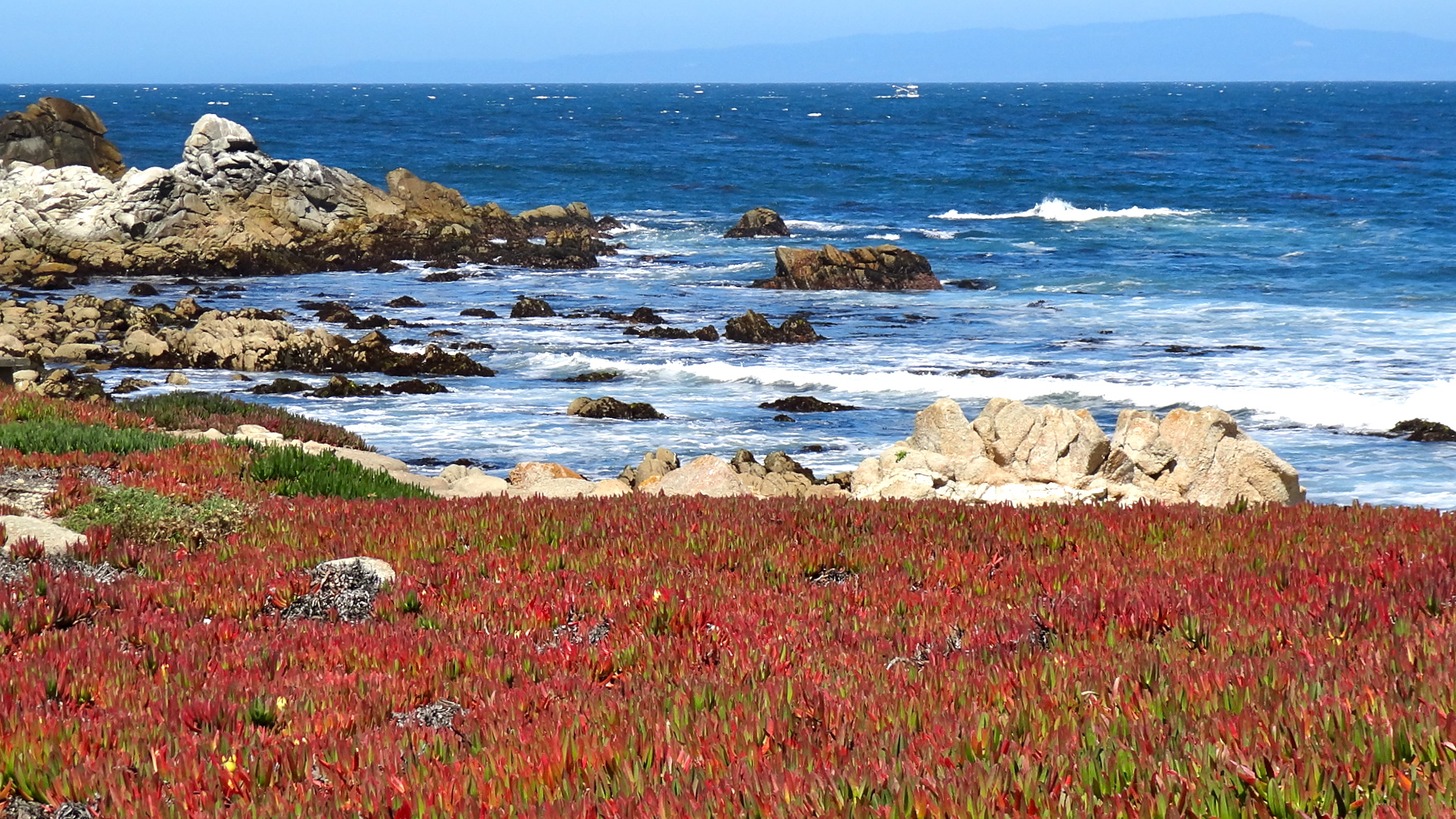 Pacific Grove beauty