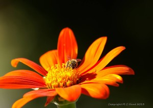 _Bee on flower
